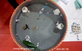 bể cá di động